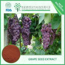Hot Sale Trustworthy China factory pure natural grape seed extract 10%-40% OPC