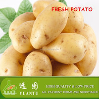 wholesale food distributors fresh Holland potato