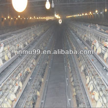 Chicken Cage with Full Automatic Systems Poultry Cage for Nigeria
