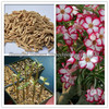 Mix color seeds adenium obesum sale