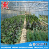 Garden Greenhouse Equipment For Agricultural