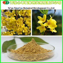 High Quality Weeping Forsythia P.E./ Forsythia Suspensa Fruit Extract From Reliable Manufacturer