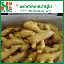 Chinese Natural fresh ginger/dried ginger/Air dried ginger prices