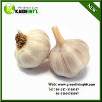 6.0 superior fresh garlic natural garlic on sale best selling products of garlic