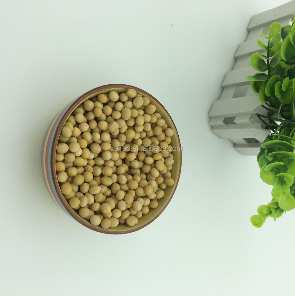 Large type paraguay soybean for dairy alternatives