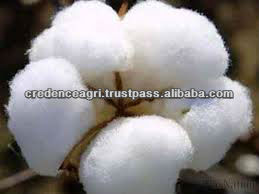 Indian raw cotton price
