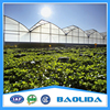 Professional Plastic Film Greenhouse Project Commercial