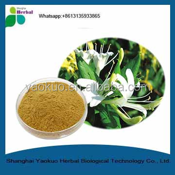 Honeysuckle Extract ,High Quality HoneySuchle Flowers Extract /Chlorogenic Acid Yellow-Brown Fine Powder