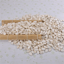 bulk supplier high quality raw and roasted pumpkin seeds