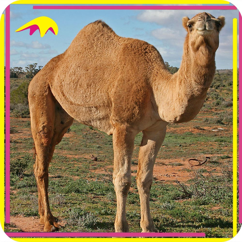 KANO6659 Prehistoric Park Highly Detailed Full Sized Animatronic Outdoor Camel Statue