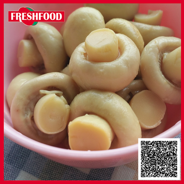 High quanlity Fresh Food mushrooms/canned champignon/canned shiitake mushroom