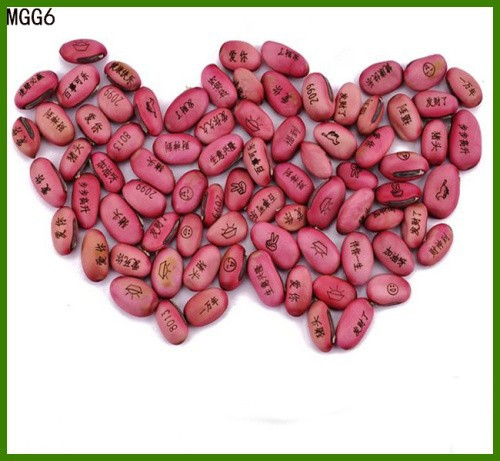 agent of magic growing message magic bean seeds Kidney Beans