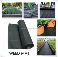 cheap pp black plastic ground cover