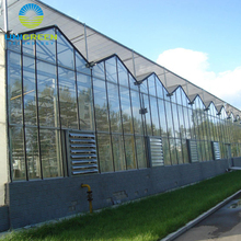 Mordern designed Venlo Glass Horticultural Greenhouse Used Commercial Hydroponic Systems