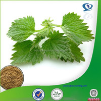 Nettle leaf extract powder.