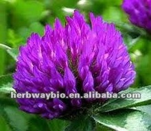 Supply High Quality Red Clover P.E.