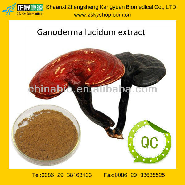 GMP manufacturer supply Top-quality Lucid Ganoderma P.E.Polysaccharides 10%,30%,50%