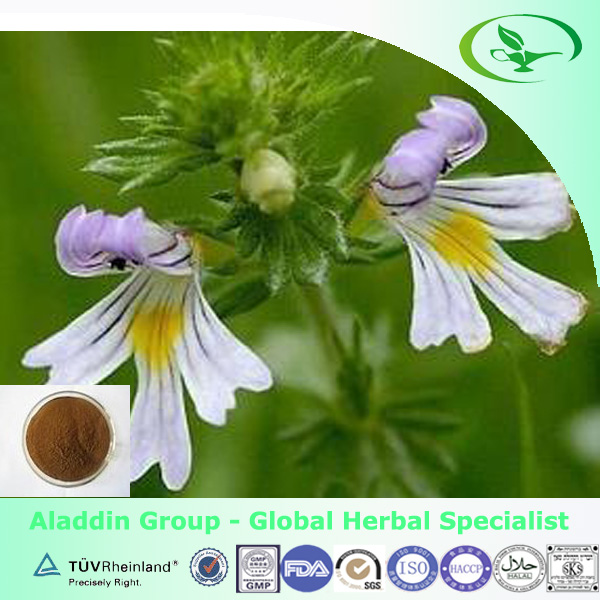 Eyebright extract Powder for health formulation