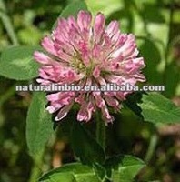 Red Clover P.E.40% HPLC Test