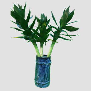 40cm lotus lucky bamboo indoor DRACAENA SANDERIANA water plants garden decoration