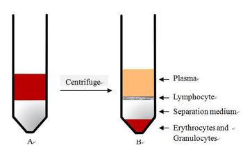 Lymphocyte Separation Medium for Human Peripheral Blood