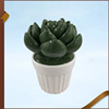 Wholesale Decorative Ceramic Cactus Statue Plant