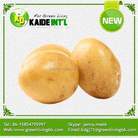 2016 hot sale high quality fresh potato