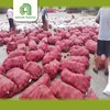 /product-detail/good-brand-fresh-chinese-onion-in-mesh-bag-for-sale-60424948639.html