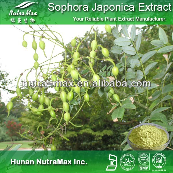 QS&ISO9001 cert Sophora Japonica Root Extract Quercetin Rutin 98% with free samples