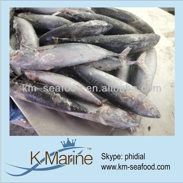 Frozen fish bonito whole offfer