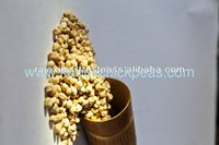 Best Price of Chickpeas in india