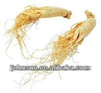 TOP QUALITY Prolong life Ginseng Root Extact / P.E