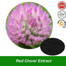 Red Clover Extract Powder Red Clover Powder Isoflavones 40% for Health Products