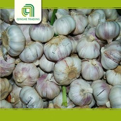 wholesale asian foods fresh garlic with high quality
