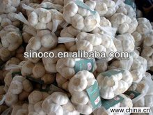 garlic exporters china fresh white garlic natural garlic china supplier