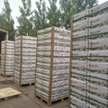 China garlic manufacturer in Jinxiang Shandong and garlic with pallet