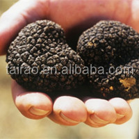 New crop dired black & white truffle black truffles for sale tuber uncinatum black truffles