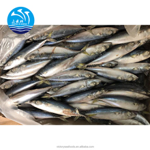 Best Quality Land Frozen Mackerel Whole Fish For Canned