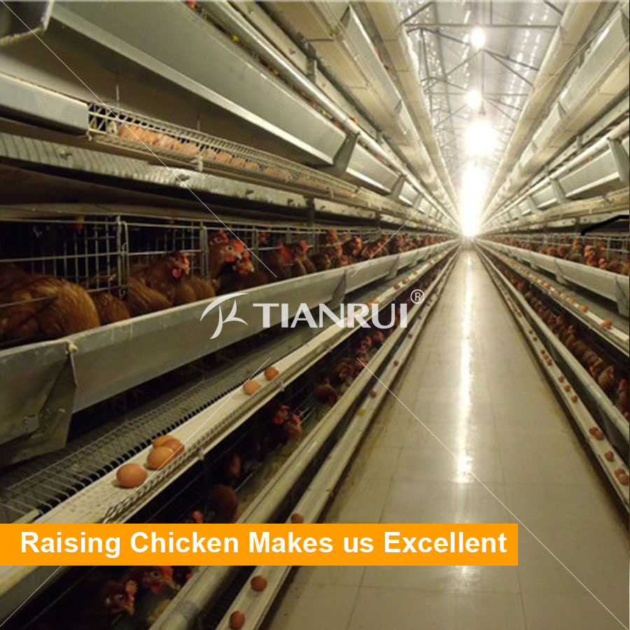 Tianrui Modern Automatic Day Old Layer Chicks Cages System