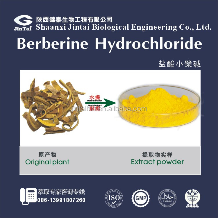 pure natural berberine coptis chinensis extract
