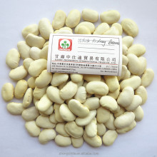 Good White Kidney Beans with Excellent Quality
