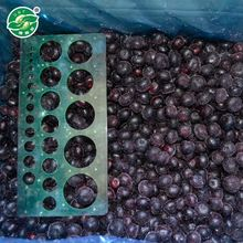 ISO Approved Yummy frozen berry exporters fruits blueberry