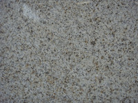 latest natural best price marble made cheap china yellow granite