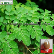 GMP Manufacturer Supply 10:1 moringa oleifera extract powder