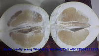 Guanxi pomelo ,fresh pomelo fruit for sale