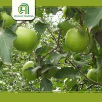 cheap supply green apples types of green apples with great price