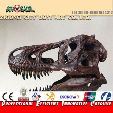 Science Exhibition real dinosaur head fossil specimens