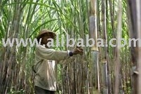 Sugar Mills Refinery Ready to Sells or Seeks Hands On Investor in East Java, Indonesia