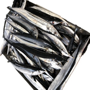 Pacific Saury WR new fish coming sea frozen fish 2#