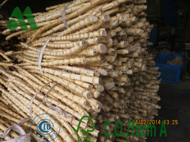 bamboo root cane bamboo rhizome in good quality high quality bamboo root sticks buy bamboo. Black Bedroom Furniture Sets. Home Design Ideas